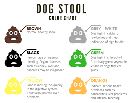 Dog Color Chart A Complete Guide To Dogs Stool Color Shape Consistency