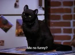 Pin by priscilla carpenter on Logan Wade Lerman in 2020 | Salem cat, Spirit  animal, Cat memes