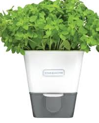 the 7 best self watering planters of 2021