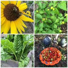 union county means green 2019 community garden grants