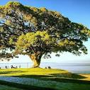 imagem de São Lourenço do Sul Rio Grande do Sul n-8