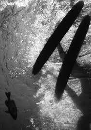 under water essay life under water essay
