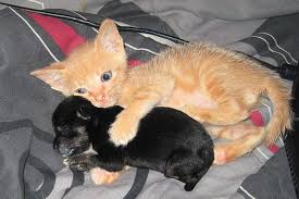 kittens and puppies hugging. Simple And Adorable The Animals Embrace And Kittens Puppies Hugging N