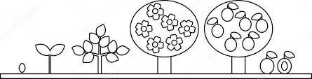 Kleurplaat Levenscyclus Van Pruimenboom Plant Groei Fase Uit Zaad