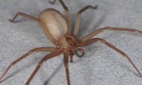 Spider Expert Outlines Expressions Of Skin Conditions Often