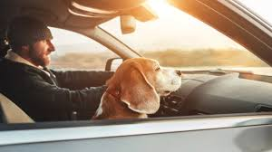 It's also a great idea to get pet insurance and travel insurance prior to your trip. Lemonade Pet Insurance Review Comprehensive Insurance To Keep Your Furry Friends Healthy