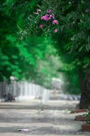 hd blur background for photo editing hd blur background for photo editing