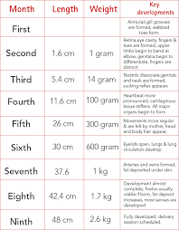 Baby Development Chart Pregnancy Stages Pregnancy Calendar Fetal Development