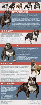 Types Of Pitbulls Chart 5 Types Of American Bully Dog Breeds American Bully Daily