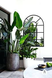Indoor home office plants royalty Set Vector Diy Fotolia Home Office Design Ideas Pictures Best Large Indoor Plants Tall
