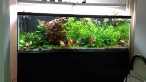 Low Light Cold Water Aquarium Plants 12 Best Goldfish Plants For Your Tank That They Wont Eat