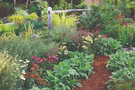 Small Picture New book highlights drought tolerant garden solutions Berkeleyside