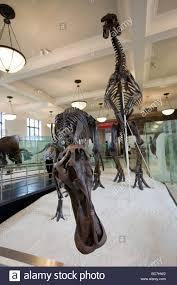 Fossil Paleontology Stock Photos Fossil Paleontology Stock