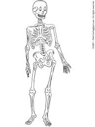 Small Picture skeleton coloring pages skeleton printable coloring pages for