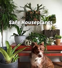 pet safe indoor plants