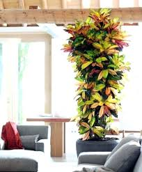 large indoor plants and trees large living room plants best tall indoor plants ideas on best large indoor plants