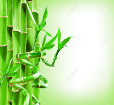 Beautiful Green Bamboo Border For You Design Stock Photo Picture