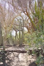 moorten s botanical garden palm springs ca living with leslie