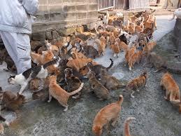 hundreds of cats. Fine Cats Aoshima Island Is Famous As U201cCat Islandu201d Actually A Small Inside Hundreds Of Cats