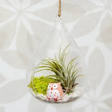 Air Plant Terrarium Hanging Glass Water Drop Air Plant Terrarium By Dingading