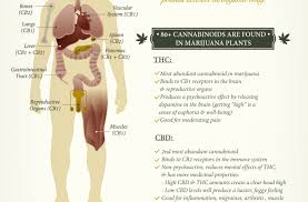 cannabinoids effects body