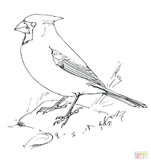 Cardinals Coloring Pages St Cardinals Logo Coloring Pages St Free