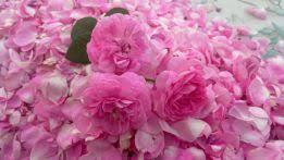 Картинки по запросу вино из чайной розы