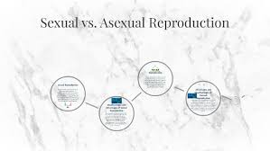 Sexual Vs Asexual Reproduction By Maeve M On Prezi
