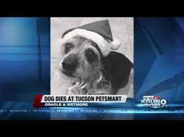 Dog Dead After Grooming Service At California Petco Peta