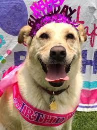Happy birthday, Mattie!! ❤️🐾🎂 - Richter Animal Hospital   Facebook