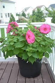 the est way to diy large plant pots