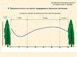 Особенности полевых опытов по защите почв от эрозии презентация  5 Полевые опыты на полях защищенных лесными полосами Скорость ветра в межполосном пространстве 1 зона 3 зона направление господствующих ветров