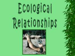 symbiotic relationships symbiotic relationships