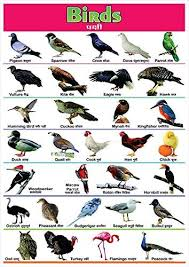 Hindi Birds Name Chart 100yellow Paper Birds Name Printed Poster Educational Poster Wall Chart Multicolour 12 X 18