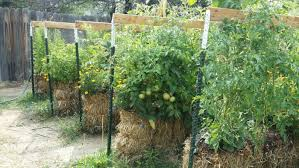 straw bale gardening instructions and