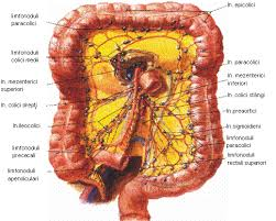 Cancer colorectal, rolul si importanta colonului in sanatate