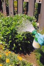 fertilizing flowers and bulbs grown