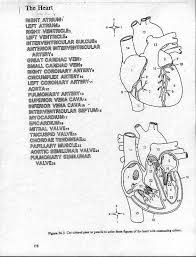 Small Picture Heart Anatomy Coloring Pages Miakenasnet
