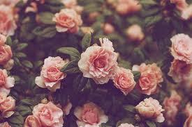 background flower wallpaper vine