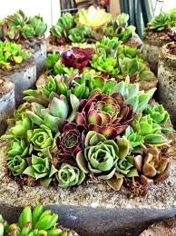 how to make a succulent garden. Exellent Succulent How To Make A Succulent Garden Centerpiece For To A