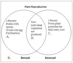 Venn Diagram Plants Compare The Venn Diagram Of Sexual Reproduction And Asexual