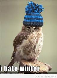funny bird meme quote i hate winter