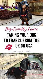 can i take my dog to france travelnuity