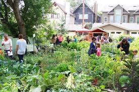 community gardening. Hillhurst Sunnyside Community Garden Gardening