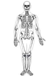 Small Picture Coloring page human skeleton coloring picture human skeleton