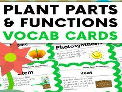 Plant Parts And Functions Vocabulary Cards