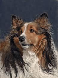 shetland sheepdog pet therapy dog painting portrait