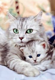 cats and kittens pictures. Plain Kittens Picture Of Cat And Kitten Sitting Together Intended Cats And Kittens Pictures T
