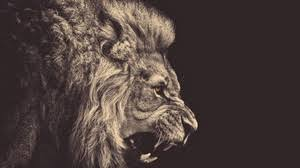 roaring lion wallpaper hd 1080p. Interesting Wallpaper Preview Wallpaper Lion Mane Big Cat Grin And Roaring Lion Wallpaper Hd 1080p I