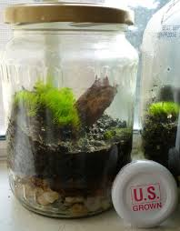 keep reading to find out how to make a terrarium in a jar so that you can finally have the garden you ve always wanted
